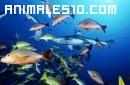 Clases de peces