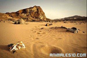 Documental del desierto de Namib