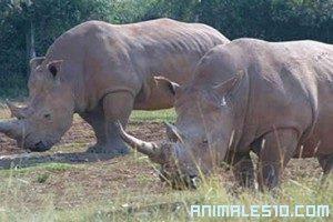 Animales buscando pareja