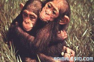 ¿Monos como Mascota?