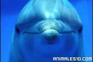 ¿El Animal Mas Inteligente?