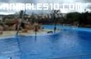 Día con leones marinos
