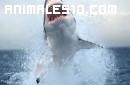 Los peligrosos tiburones