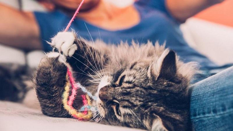 actividades que puedes hacer con tu gato