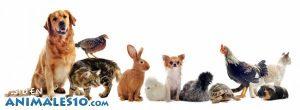 Animales domésticos