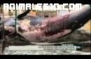 Ballena se cae de una grua en el puerto