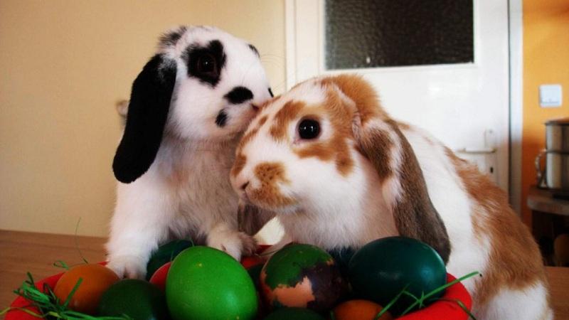 cuidar a tu conejo