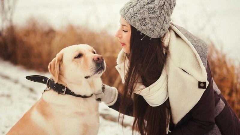 cuidar perro en invierno