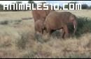 Estampida de elefantes ante turistas