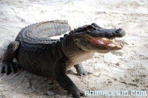 Puenting sobre cocodrilos