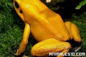 El animal mas venenoso del mundo
