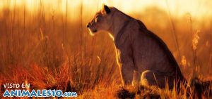 La reina de la selva