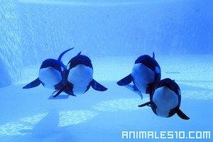 Pescadores perjudicados por las orcas