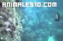 Submarisnismo en el Mediterraneo