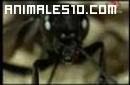 Araña de las dunas contra Avispa