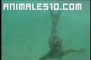 Sirena grabada por una camara
