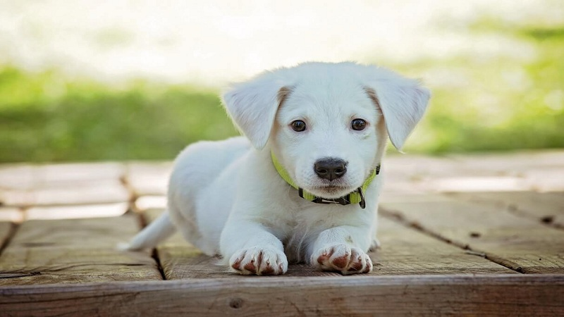 vitaminas infaltables perro